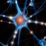 Les Neurones Miroirs : rôle et utilité