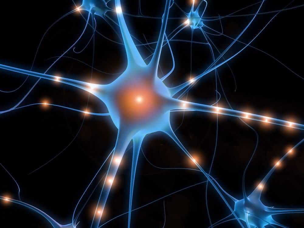 cellules nerveuses définition