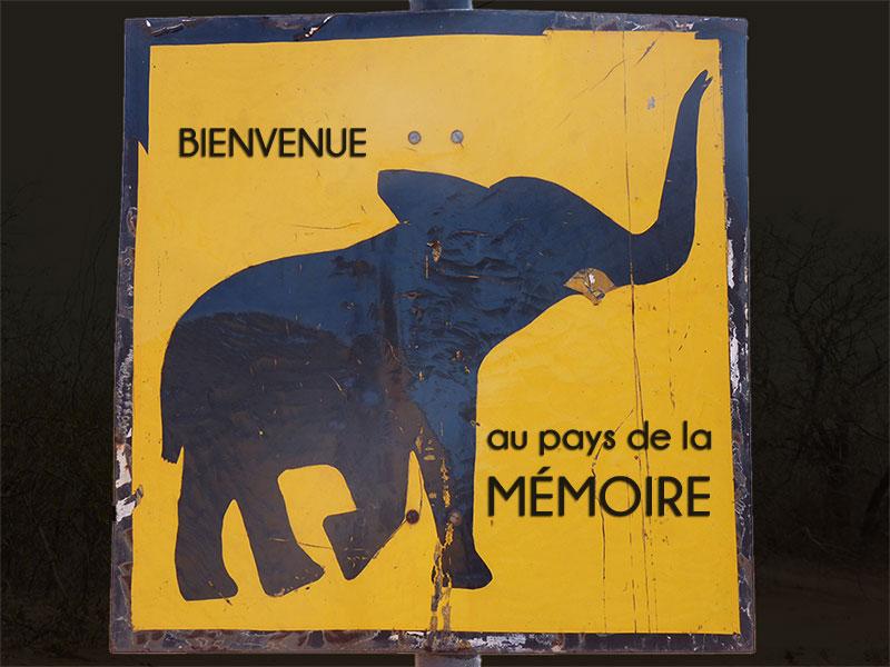 memoire-memoires-fonctionnement-cerveau-apprentissage